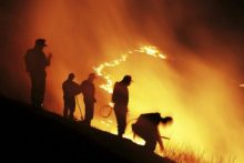 Forest fires (iStock)