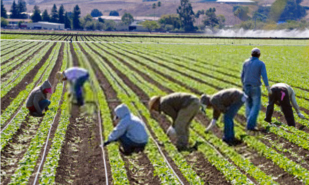 implications of immigration policies for u s  farm sector and workforce