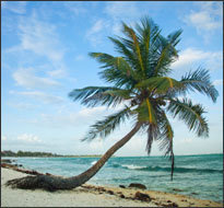 Paradise beach, Mexico (iStock)