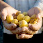 Farmhand (iStock)
