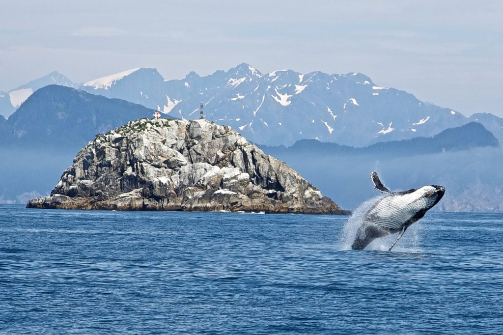Impact Of Whaling On The Ocean Carbon Cycle Journalist S