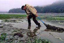 Harvesting oysters in Yaquina Bay, Ore. (NOAA)