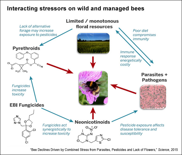 Interaction of bee stressors (Science, 2015)