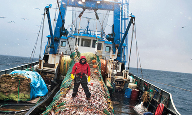 oceanic fishery essay
