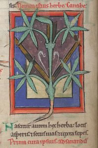 12th century manuscript of medicinal plants from France or England. (British library)