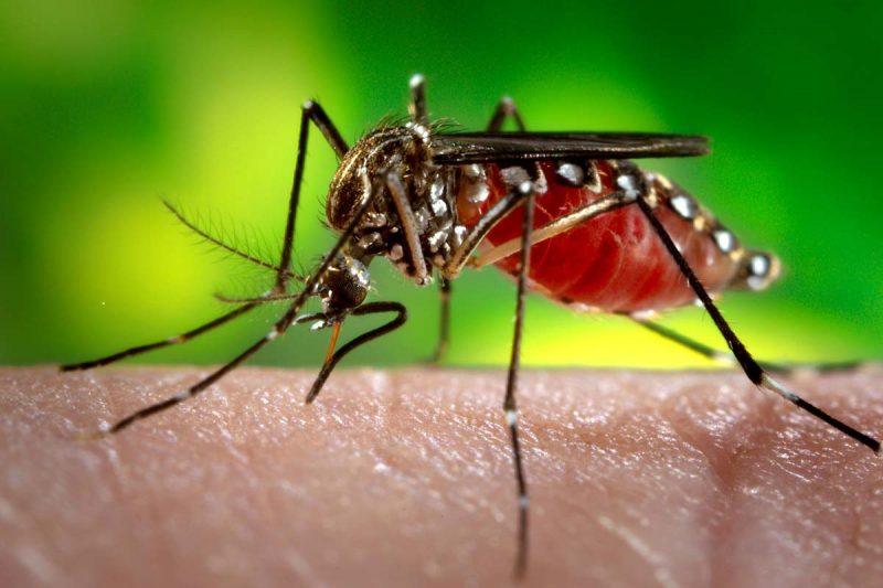 Positive early findings for potential Zika vaccine