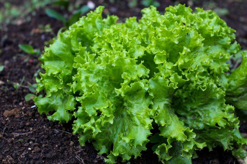 salad- seems harmless enough, till you eat it